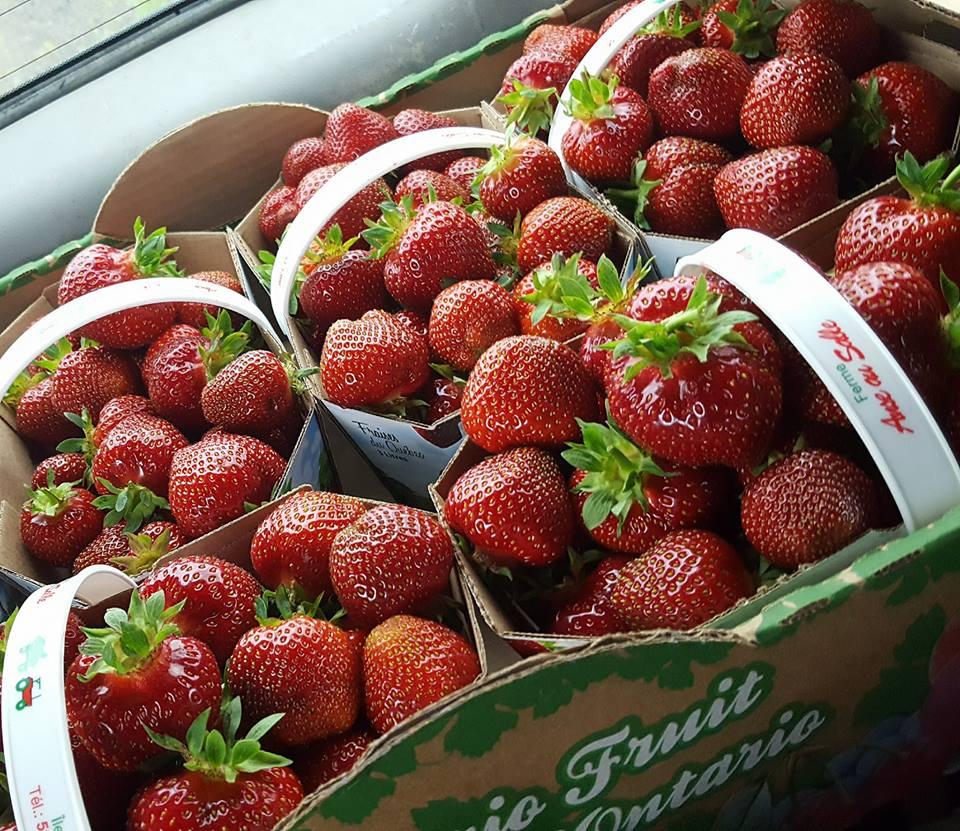 fraises autocueillette agrotourisme