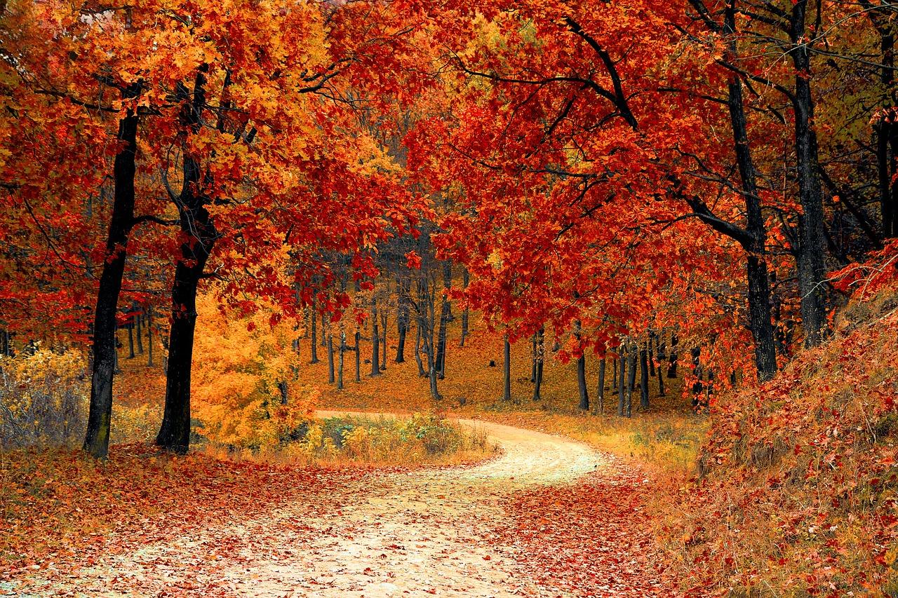 Automne sentier parc forestier couleur